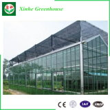 De Serre van het Blad van het Polycarbonaat van Venlo van de multi-Spanwijdte van de Landbouw van China voor Verkoop