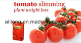 Natural tomate Poids usine perte pilules amincissantes