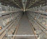 Система клетки цыпленка бройлера слоя для фермы цыпленка для сбывания (типа рамка)