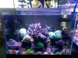 Regulable azul y blanco Coral Reef LED 72W Luz Auqarium