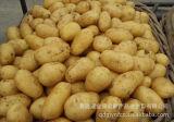 Hochwertiges neues Getreide-frische Kartoffel (150g und up)