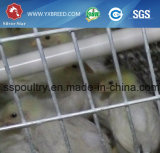 Cuvette de câble d'alimentation de PVC pour la cage de batterie de volaille pour l'Algérie (A-3L90)