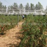 Natuurlijke voeding Rode Goji van het Gedroogd fruit van de mispel de Organische