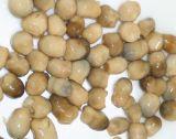 Il commercio all'ingrosso inscatolato divide in due il fungo di paglia