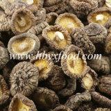 農業の中国からの食糧によって乾燥されるスムーズな椎茸きのこ