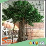 Вал Ficus горячего украшения сбывания крытого искусственний