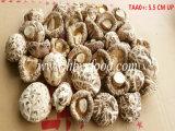 гриб белого цветка 5-5.5cm высоким высушенный питанием