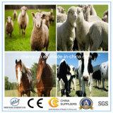 Gebildet im China-Bauernhof-Zaun-Vieh-Zaun-Pferden-Zaun
