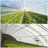 HDPE Antiinsekt fängt grünes Gemüsenetz für Beweis-Insekt
