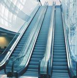 Escadas rolantes resistentes do transporte público