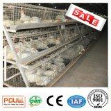 Kooi van de Braadkip van het Landbouwbedrijf van het gevogelte de Automatische
