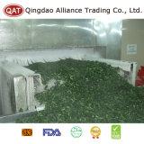 Kale Frozen com qualidade superior e bom preço