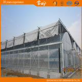 Vegetable Growing를 위한 상업적인 다중 Span Plastic Film Greenhouse