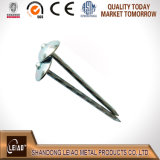 La meilleure qualité Unberlla Head Roofing Nails