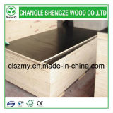 Пленка Shengze деревянная изготовленная смотрела на переклейку