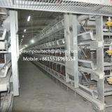 Matériel de système automatique de bande des cages H de couche de poulet pour des oeufs de ferme avicole