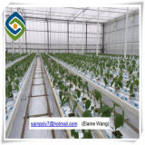 PC Sheet Greenhouse Polycarbonate Greenhouse für Agricutural Growing