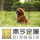 Dois produtos do animal de estimação do cão das portas