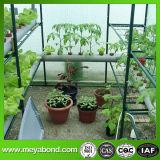 10cm 메시는 그물 녹색 식물 지원 내밀었다