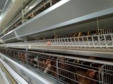 La volaille préfabriquée de poulet de structures métalliques logent