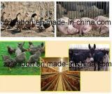 鶏のリングは機械を作る鶏の餌の餌を停止する