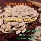 Семена тыквы кожи Shine китайца