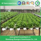Sla de Groene Huizen van het Blad van het Polycarbonaat van de Prijs