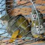 Pequeños jaulas del gato y acoplamiento del recinto/acoplamiento de alambre de acero inoxidable