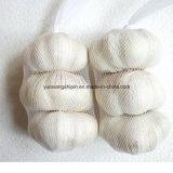Commercio all'ingrosso dell'imballaggio del sacchetto del nuovo aglio fresco del raccolto della Cina piccolo
