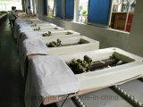 Base da massagem da fisioterapia do jade para curar a garganta e a dor traseira