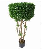 Pianta del Boxwood del Topiary della pianta decorativa personalizzata