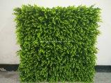Parete di verde di erba di Verticial della decorazione dell'ufficio
