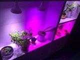 O bulbo do diodo emissor de luz cresce claro para plantas decorativas internas