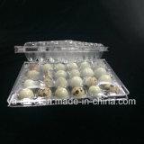 Großhandelsverkaufs-Plastikwachtel-Ei-Tellersegment 24 PCS