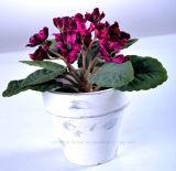 Violeta plástica artificial multicolora de la flor en el crisol de papel de Mache para la decoración