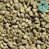 Estratto verde del chicco di caffè/acido clorogenico