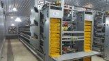 Camera di controllo di strato del pollo con le gabbie automatiche dell'insieme completo