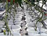 Pipe d'irrigation par égouttement d'Eau-Économie de PE avec les dispositifs d'écoulement ronds