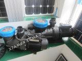 Qualität Gleichstrom-Solarpool-Pumpe