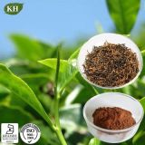 Extrait 100% sain de thé noir de qualité pure de nature