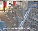 Il pollame della griglia di strato dell'azienda agricola di pollo mette in gabbia la strumentazione (un tipo blocco per grafici)