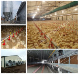 自動Poultry Broiler EquipmentおよびFarm Contruction