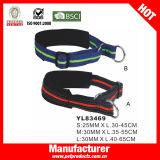Form-Nylonhundehalsring, kundenspezifischer Hundehalsring (YL83507)