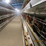 gaiola automática cheia da galinha da capacidade de 5tiers 160birds