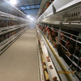 5tiers 160birds 수용량 가득 차있는 자동적인 닭 감금소