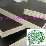 Shuttering Triplex van de Bekisting Plywoodconcrete van de Bouwconstructie het Materiële Film Onder ogen gezien---Gouden Geluk