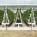 Invernadero comercial del hidrocultivo para el invernadero agrícola