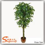 Qualitätkünstlicher Ficus-Pflanzenbaum für Dekoration (TH-21)