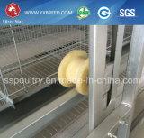 Cage d'oeufs pour la grande ferme