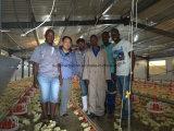 Kundenspezifisches automatisches Gerät im Viehbestand-Haus mit Installation